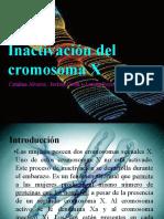 Inactivacion Cromosoma X Las Mejores