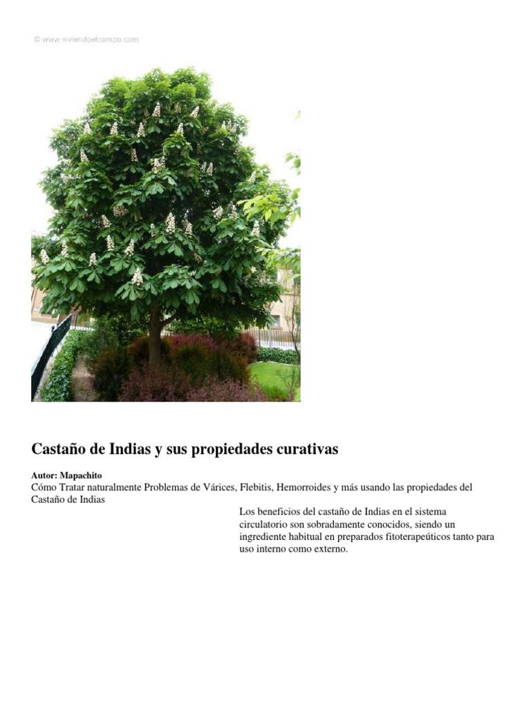 beneficios del castano de indias en capsulas