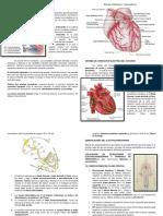 3.1 Generalidades Del Aparato Cardiovascular -