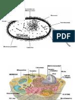 3-La célula.pptx