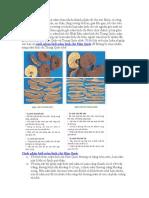 Cách Phân Biệt Nấm Linh Chi Hàn Quốc