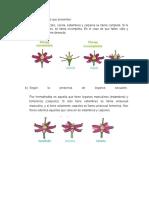 Clasificacion de Flores