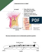 Anatomie-comparată
