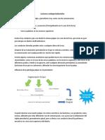 2.- Lesiones endoperiodontales