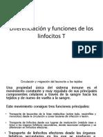 Activación linfocitos T examen