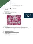 Pathology Lecture 7 - Liver