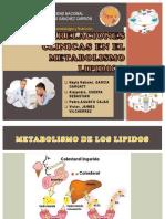 Correlaciones Clinicas Del Metabolismo LipidicO LL