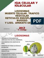 175464240-Lisosomas-Muerte-y-Trafico-Vesicular.ppt
