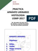 Histologia 2017- Aparato Urinario Practica