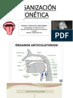 Organización Fonética - Taller 1