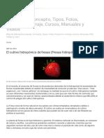 Hidroponia, Concepto, Tipos, Fotos, Proyectos, Forraje, Cursos, Manuales y Videos_ El Cultivo Hidropónico de Fresas (Fresas Hidropónicas)
