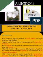 Algodon Expo