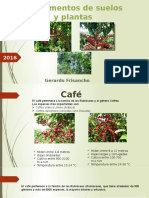 Cafe Cacao Arandano
