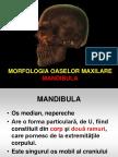 Morfologia Oaselor Maxilare-curs 4