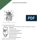Taller de Biologia Grados 7 Sistema Circulatorio