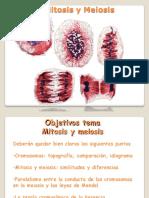 documents_genetica_gen_tema-3-mitosis-y-meiosis201334-1839.pdf