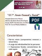 7°_Nervio_Craneal_o_Facial