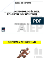 Anatomia07 Musculos01 2017 (1)