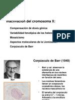 Corpusculo de Barr