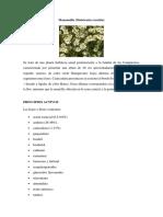 geranio y manzanilla descripción.docx