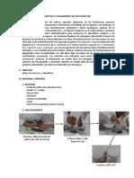 AISLAMIENTO DE AZOTOBACTER