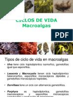 Ciclos de Vida Macro Algas Clase 2
