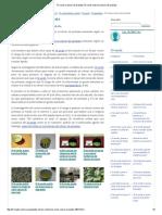Té verde y cáncer de próstata Té verde contra el cáncer de próstata.pdf