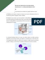 Contenido de Electrolitos en Secreciones Gastrointestinales y Cantidad de Producción