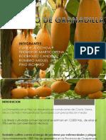 Cultivo de Granadilla