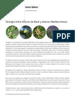 Sinergia Entre Elixires de Bach y Elixires Mediterráneos _ Elixires Florales Lotus Blanc