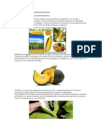 Los Productos Agricolas de Chilca