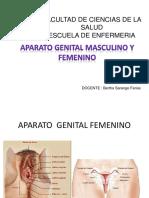 Organo Genital Masculino y Femenino