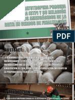 Somatotropina Porcina Exógena STp y Susu relacióncon los aminoácidos de la dieta en cerdos