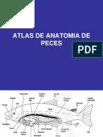 Atlas de Anatomia de Los Peces