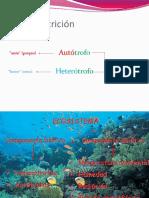 Flujo de Energía en Los Ecosistemas y Pirámides Troficas 2014.Ppt (2)