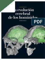 BRUNER, E. 2012. La Evolución Cerebral de Los Homínidos