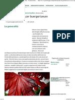 Acero Rosso - Acer Buergerianum - Piante Da Giardino - Caratteristiche Dell'Acero Rosso