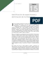Identificación de especímenes y delimitación de morfoespecies