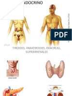 Sistema Endocrino Tiroides, Paratiroides, Pancreas, Suprarrenales.