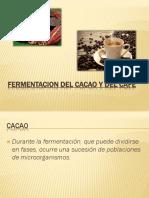 Fermentacion Del Cacao y Del Cafe