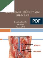Anatomia Del Ri n