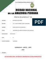 informe-aparato-reproductor-hembra-vaca-y-marrana.docx