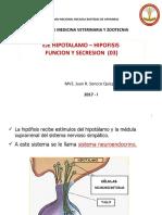 Clase 03 Endocrino