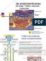 Trafico de Proteinas -AP. de Golgi-Lisosomas Bio I 2014 I (5)