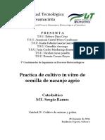 Cultivo in vitro de semillas de naranja agrio