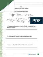 ciclos de vida anfibio.pdf