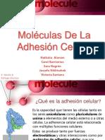 Moléculas De La Adhesión Celular