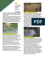 10 Noticias de Contaminacion Ambiental