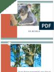 El Koala Benjamin