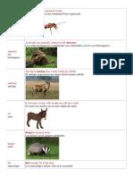Caracteristicas de Los Animales en Ingles